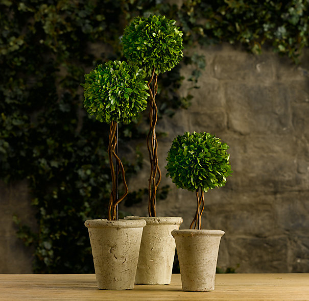 Live Topiary Part - 25: Preserved Boxwood Topiary